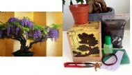 Wisteria Bonsai Kit - Soil/Pots/Seeds2x/Wire/Fertilzer/Potting Mesh/Tweezers...